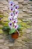 Stone wall, flowerpot, Phalaenopsis Royalty Free Stock Image