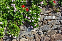 Stone wall with flowers Royalty Free Stock Photo