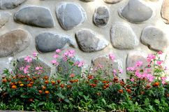 Stone wall. Flowers grow in a stone wall Royalty Free Stock Image