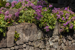 Stone wall and flowers Stock Image