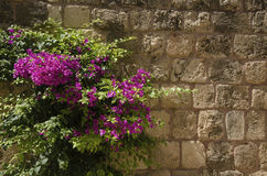 Stone wall with flowers Stock Photos