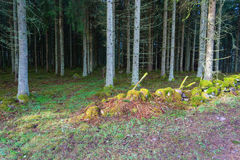 Stone wall in a forest Stock Image