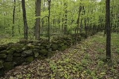 Stone Wall Forest Stock Photography