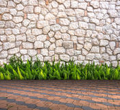 Stone wall and fox-tail on Cement brick floor interior modern style Stock Photos