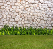 Stone wall and fox-tail with Green field Stock Image