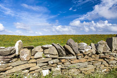 Stone wall in front of a yellow flowered meadow Royalty Free Stock Photography
