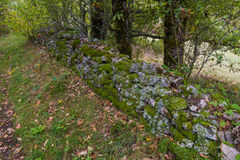 Stone wall full of Mosses and Lichens Stock Photography