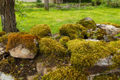 Stone wall full of Mosses and Lichens Stock Photo