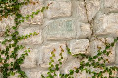 Stone wall with green creeper plant Royalty Free Stock Photo