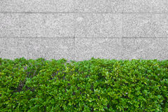 Stone wall and green leaf background Stock Photography