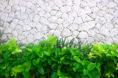 Stone wall and green leaves. Background Stock Photos