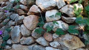 Stone wall with green leaves stock photo