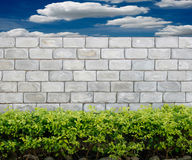 Stone wall with green leaves Royalty Free Stock Photo