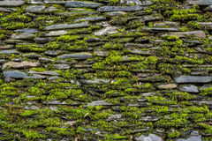 Stone wall with green moss Royalty Free Stock Image
