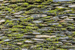 Stone wall with green moss Royalty Free Stock Photos