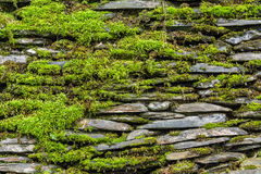 Stone wall with green moss Stock Photography
