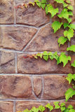 Stone wall with green plant. Stock Images