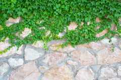 Stone wall and green plants Stock Photography