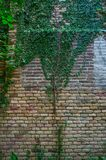 Stone wall and green plants Royalty Free Stock Image