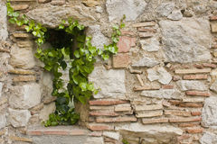 Stone wall and green plants Royalty Free Stock Photos
