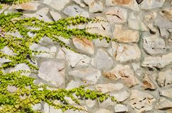 Stone Wall With Greenery Royalty Free Stock Images