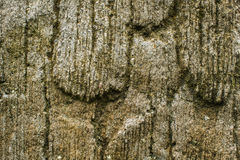 Stone wall with greenery. Texture Stock Images