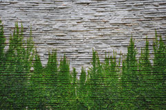Stone wall with ivey Stock Photo