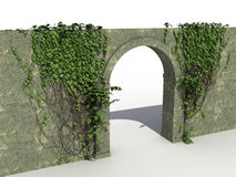 A stone wall with ivy �2 Stock Images