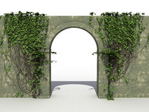 A stone wall with ivy №1 Stock Image