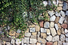 Stone Wall with Ivy. Decorative stone wall covered with green English ivy Stock Photos