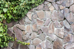 Stone wall with ivy. Massive wall of cut stone on which the green ivy grows Stock Images