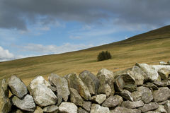 Stone wall moorland. A dry stone wall leads to open moorland on a hillside with a small pine tree copse Royalty Free Stock Photography