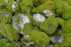 Stone wall with mos. Stone wall with green mos Royalty Free Stock Photos
