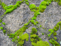 Stone wall with moss background Royalty Free Stock Photography