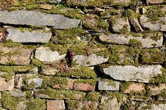Stone wall and moss Royalty Free Stock Image