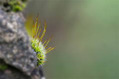 Stone wall moss Royalty Free Stock Images