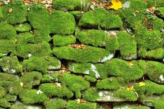 Stone wall with moss Royalty Free Stock Image