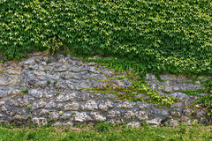 Stone wall overgrown with ivy Royalty Free Stock Photography