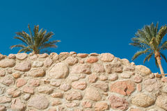Stone wall and palms against the blue sky Stock Image