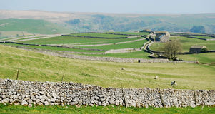 Stone wall panorama - Yorkshire Dales (UK) Royalty Free Stock Photo