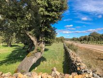 Stone wall on the pasture with holm oak and blue cloudy sky. In Spain Royalty Free Stock Photos