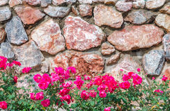 Stone wall with pink flower Stock Photography