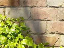 Stone wall with plant Stock Image