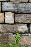 Stone wall. Plants growing on a stone wall Royalty Free Stock Photo