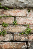 Stone wall with plants, textured background Stock Photos