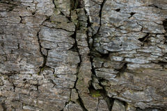 Stone wall of rock with cracks Stock Images