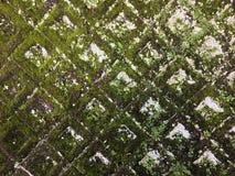 Stonewall. Stone wall rock moss Stock Image