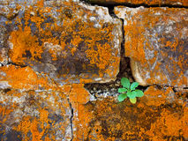 Stone wall with rust, grunge texture Stock Images