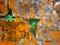 Stone wall with rust, grunge texture Royalty Free Stock Photography