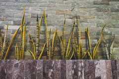 Stone Wall, Steps and Planter Royalty Free Stock Photography
